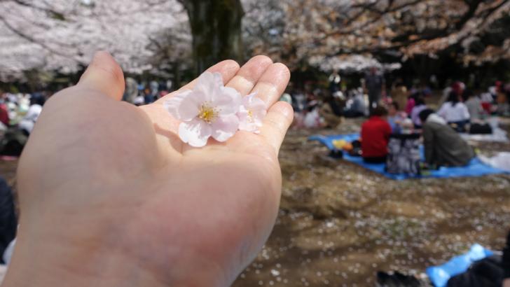 お花見@代々木公園